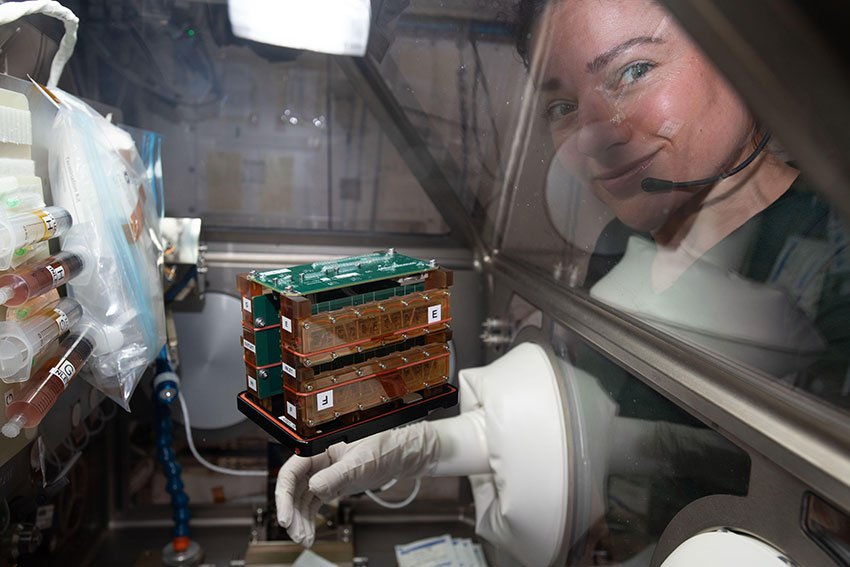 Astronaut Jessica Meir with the engineered heart tissues in their electronic habitat aboard the International Space Station (ISS). Photo courtesy of NASA
