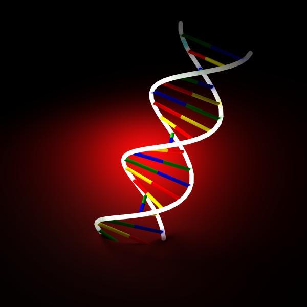 University of Maryland Medical Center Genetic-Testing Program Cardiac Stent