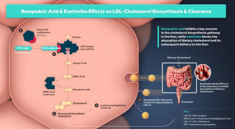 The U.S. Food and Drug Administration (FDA) approved Esperion's bempedoic acid (Nexletor) tablet, an oral, once-daily, non-statin low-density lipoprotein cholesterol (LDL-C) lowering medicine. The drug is indicated as an adjunct to diet and maximally tolerated statin therapy for the treatment of adults with heterozygous familial hypercholesterolemia (HeFH) or established atherosclerotic cardiovascular disease (ASCVD) who require additional lowering of LDL-C.