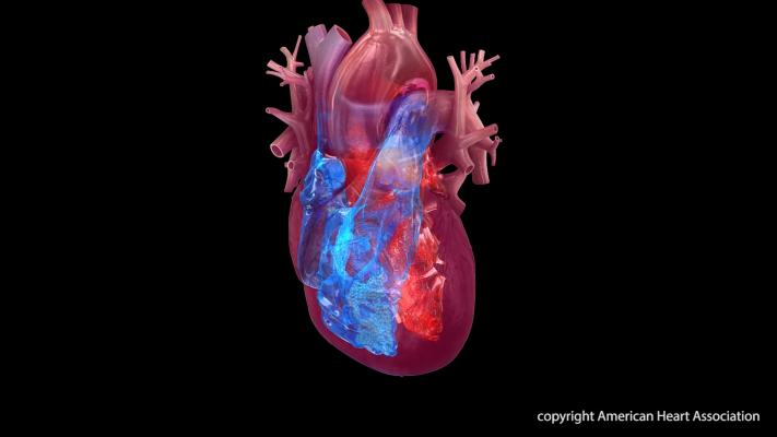 Heart failure associated with methamphetamine (meth) use has risen dramatically in recent years among U.S. veterans, according to preliminary research presented at the 2017 American Heart Association (AHA) Scientific Sessions.