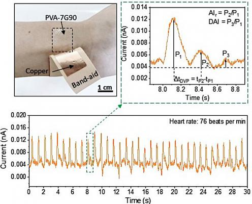 A team from Purdue University developed self-powered wearable triboelectric nanogenerators with polyvinyl alcohol-based contact layers for monitoring cardiovascular health.