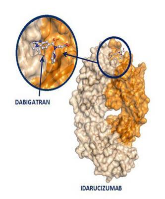 idarucizumab, dabigatran, anticoagulant, Boehringer Ingelheim, RE-VERSE AD
