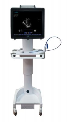 Ultrasound, Transesophageal, cardiovascular ultrasound, Zura EVO1