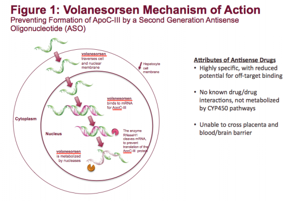 This illustrates how volanesorsen works to prevent the formation of apoC-III protein. Familial chylomicronemia syndrome (FCS) is a rare, genetic disease characterized by mutations in genes affecting the production or functionality of lipoprotein lipase (LPL).
