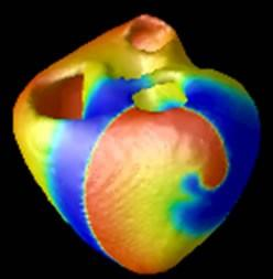 heart on a chip, organs on a chip