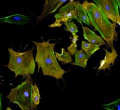 UAB, University of Alabama at Birmingham, Jianyi Jay Zhang, custom-engineered heart tissue
