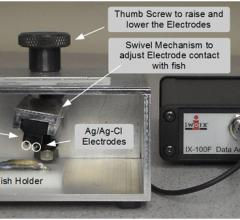 zebrafish, iWorx Systems Inc., ZS-200 Zebrafish ECG System, cardiac research