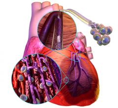 Stem Cells might be used to restore heart function by replacing the dead heart muscle following myocardial infarctions.