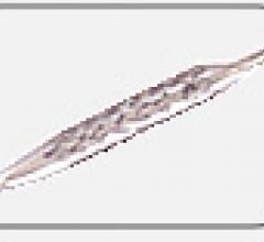 MiStent Micell Technologies Stents Bioresorbable Clinical Trial Study